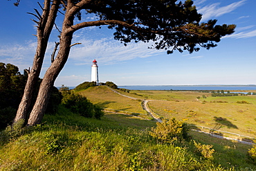 landscape with tree coast lighthouse Hiddensee Mecklenburg-Western Pomerania
