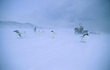Snowdrift at Sir Douglas Mawson's hut. Commonwealth Bay, East Antarctica.