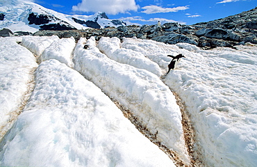Penguin pathways melted into the snow . Cuverville Island, Antarctica