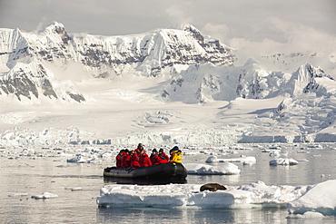 A Bull Antarctic Fur Seal (Arctocephalus gazella) on an iceberg in Drygalski Fjord, Antarctic Peninsular,