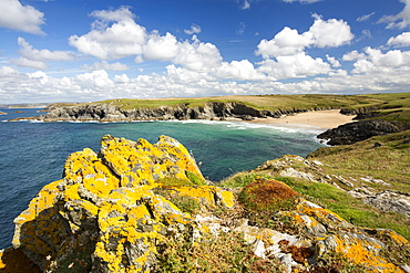 Lichen covered rocks looking towards Porth Joke on Pentire Point, near Newquay, Cornwall, UK.