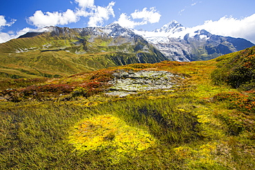 The Mont Blanc range from the Aiguillette des Posettes with Bilberry plants colouring up in late summer.
