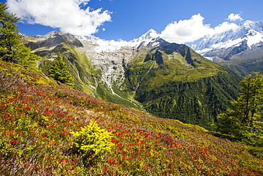 The Aiguillette des Posettes with Bilberry plants colouring up in late summer, above Chamonix, French Alps, and the rapidly retreating Glacier du tour.