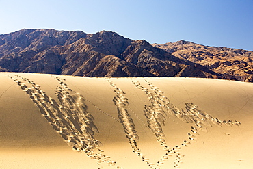 Footprints and lizard tracks on the Mesquite flat sand dunes in Death Valley which is the lowest, hottest, driest place in the USA, with an average annual rainfall of around 2 inches, some years it does not receive any rain at all.