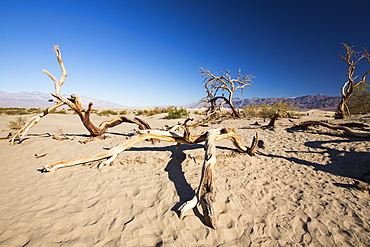 Death Valley is the lowest, hottest, driest place in the USA, with an average annual rainfall of around 2 inches, some years it does not receive any rain at all.