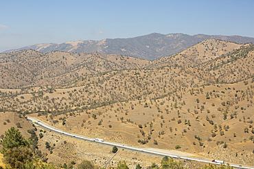 Drought killed trees near Tehachapi Pass, in California's four year long drought, USA.