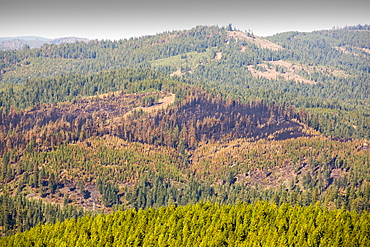 The King Fire that burned 97,717 acres of the El Dorado National Forest in California, USA. Following an unprecedented four year long drought, wild fires are much more common. Most of California is in exceptional drought, the highest level of drought classification. 428,000 acres of agricultural land have been taken out of production due to lack of water, thousands of agricultural workers have lost their jobs and one third of all children in California go to bed hungry.