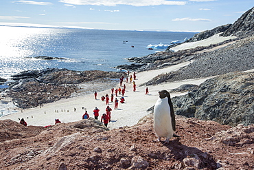Adelie Penguins, Pygoscelis adeliae at Madder Cliffs, Suspiros Bay, with tourists from an expedition cruise, at the west end of Joinville Island, Antarctica.