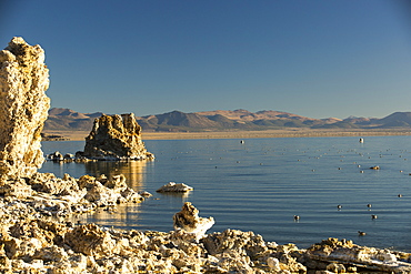 The famous tufa formations on Lake Mono, California, USA, with Black Necked Grebes,