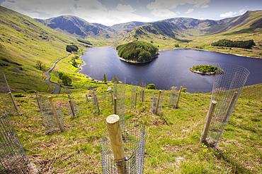 Tree planting at Haweswater, Lake District, UK.
