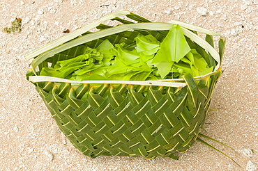 A basket woven out of a palm leaf for gathering wild food on Funafuti Atoll, Tuvalu, Pacific