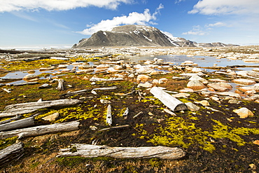 Drift wood from Siberian forests washed up on the shore at Smeerenburg (79¬844'Äôn 011¬804'Äôe) on northern Svalbard.