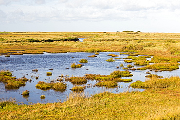 Saltmarsh in Cley on the North Norfolk coast, UK.