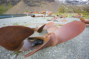 Stromness Whaling Station on South Georgia, with an Antarctic Fur Seal resting in an old propeller, it was operational until 1961, and wa the place where Sir Ernest Shackleton finally reached after his epic seas crossing and trek across south Georgia.