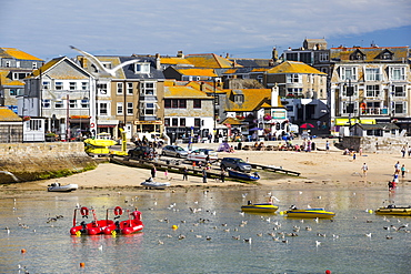 Herring Gulls in St Ives harbour at high tide, Cornwall, UK.