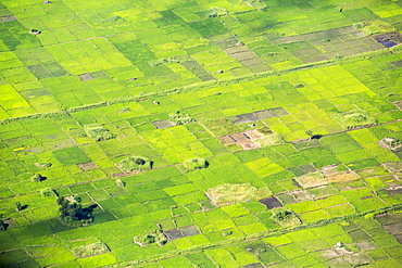 Looking down on rice crops in the lower Shire Valley, Malawi, Africa.
