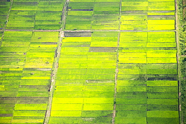 Looking down from the air onto rice paddies in the Shire Valley, Malawi, Africa.