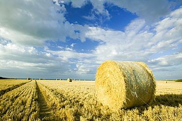 Straw bales in a field in Kelling, Norfolk, England, United Kingdom, Europe