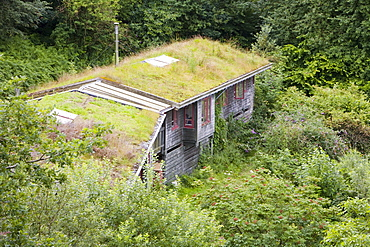 Turf roof on eco houses at the Centre for Alternative Technology in Machylleth, Wales, United Kingdom, Europe