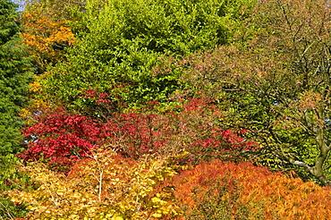 Autumn foliage in Holehird Gardens, Windermere, Lake District, Cumbria, England, United Kingdom, Europe