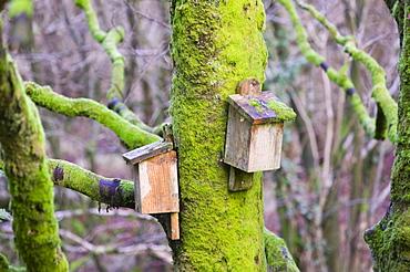 Bat boxs in the Forest of Bowland, Lancashire, England, United Kingdom, Europe