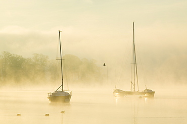 A misty morning on Lake Windermere in the Lake District, Cumbria, England, United Kingdom, Europe