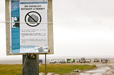 A cockling sign at Hest Bank on Morecambe Bay, Lancashire, England, United Kingdom, Europe