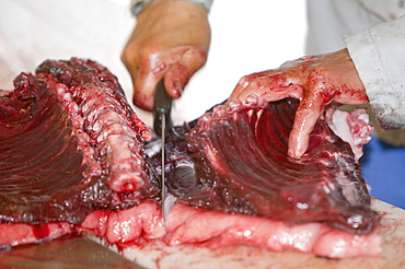 Seal meat being butchered by an Inuit man in Ilulissat in Greenland, Polar Regions