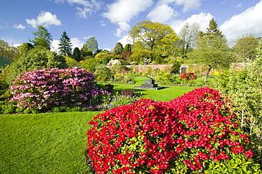 Azaleas in Holehird Gardens, Windermere, Cumbria, England, United Kingdom, Europe