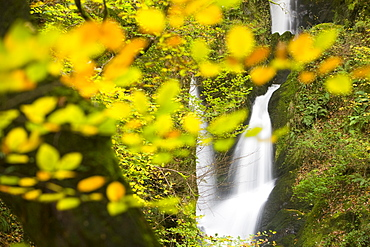 Stock Ghyll waterfall and surrounding woodland in autumn colours in Ambleside, Lake District National Park, Cumbria, England, United Kingdom, Europe