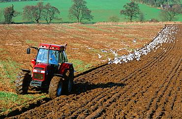 A farmer ploughing a field near Carlisle, Cumbria, England, United Kingdom, Europe