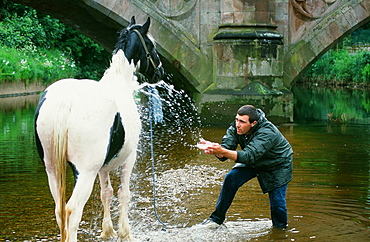 Gypsy man washing a horse in the River Eden at the Appleby Horse Fair, Cumbria, England, United Kingdom, Europe