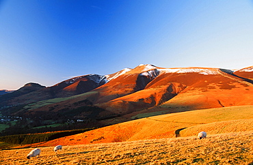 Skiddaw in autumn in the Lake District National Park, Cumbria, England, United Kingdom, Europe