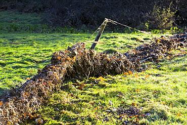 Flood debris on a fence after the October 2008 floods in Ambleside, Cumbria, England, United Kingdom, Europe