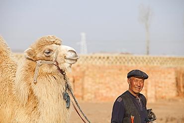 A Mongolian man leads his camel across what was the former lake bed, Hong Hai Zai, near Dongsheng, Inner Mongolia, China, Asia
