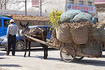A peasant famer with an overloaded donkey cart in Inner Mongolia, northern China, Asia
