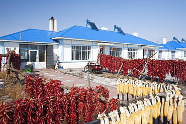 Modern farmers houses built by the local communist party on the outskirts of Suihua city in northern China, Asia