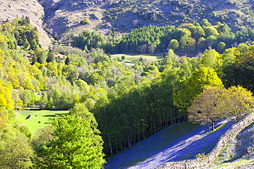 A bluebell field from Loughrigg Terrace in the Lake District National Park, Cumbria, England, United Kingdom, Europe