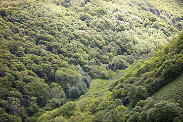 A wooded valley between Heddons Mouth and Hunters Inn on the north Devon Coast, England, United Kingdom, Europe