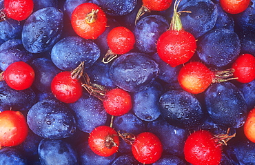 Rosehips and damsons