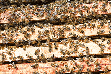 A beehive in Cockermouth, Cumbria, England, United Kingdom, Europe