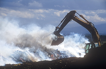 Cattle infected with foot and mouth disease culled and burning on a funeral pyre in North Cumbria, England, United Kingdom, Europe