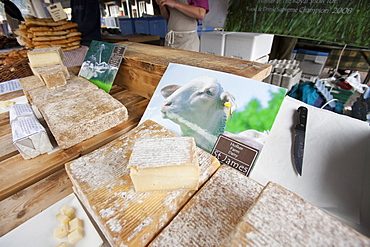Ewes milk cheese made on Holker Farm Dairy in South Cumbria, for sale on a farmers market in Kendal, Cumbria, England, United Kingdom, Europe