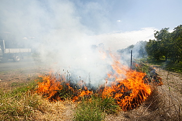 A roadside fire probably started by a motorist throwing a cigarette out of the window, near Shepperton, Victoria, Australia, Pacific