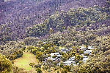 Forest burnt by bush fires above Thredbo in the Snowy mountains, New South Wales, Australia, Pacific