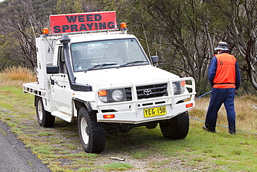 National Park staff spray weed killer on introduced plant species that are out-competing native flora in the Snowy Mountains, New South Wales, Australia, Pacific