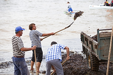 Workers shovel sea weed off the beach after a storm in Teos, Turkey, Eurasia