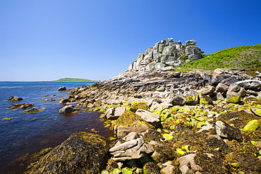 Tresco, one of the Scilly Isles, United Kingdom, Europe