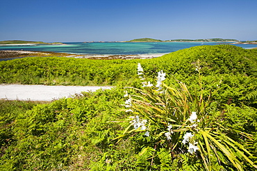 Tresco, Scilly Isles, off South West Cornwall,, United Kingdom, Europe