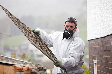 A specialist asbestos removal company removing asbestos from a shed roof in Ambleside, Cumbria England, United Kingdom, Europe